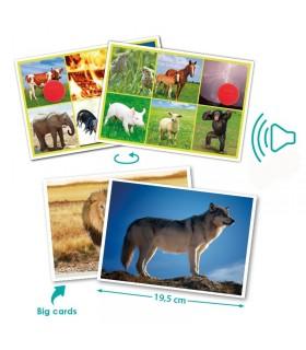 Gra edukacyjna - dźwięki zwierząt i natura